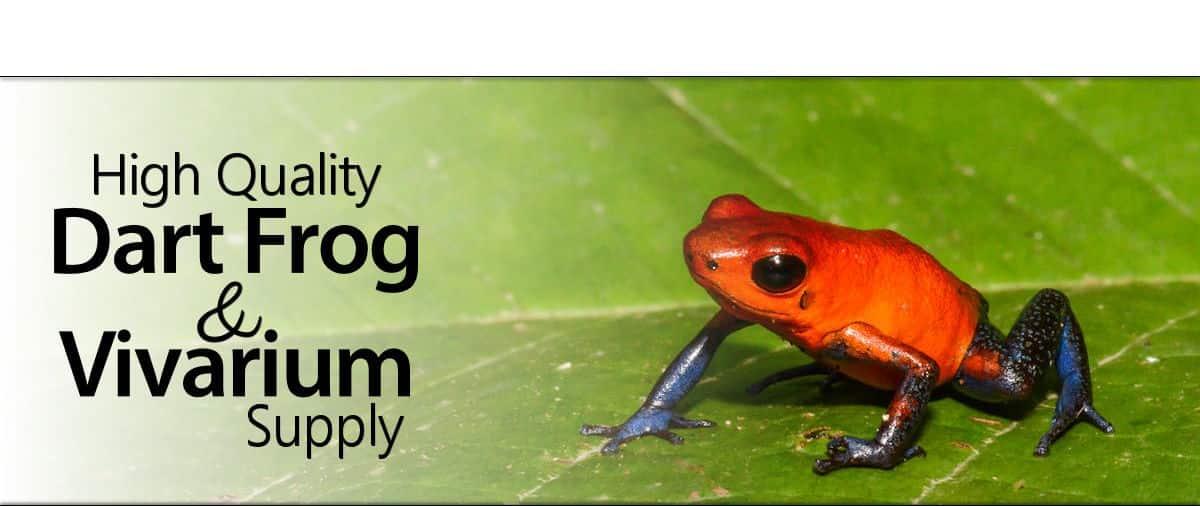 Quality Dart Frogs Professional Vivarium Supplies Froskr