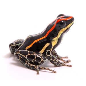 Dart Frog husbandy supplies